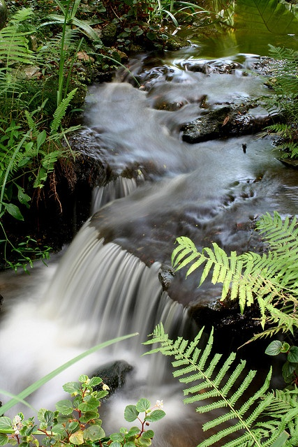 47 best images about creeks and streams on pinterest - Botanical gardens gainesville fl ...