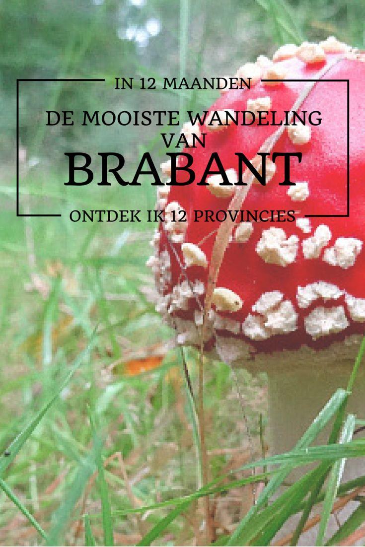 De mooiste wandeling van Brabant is volgens mijn lezers de NS Wandeling Kampina. Een schitterende wandeling van 16 kilometer door bossen en over de heide.
