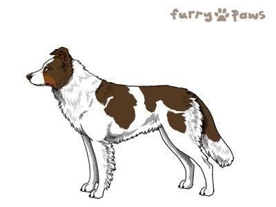 Furry Paws // WCH Kip's Raikiri [1.037] (0.1)'s Kennel