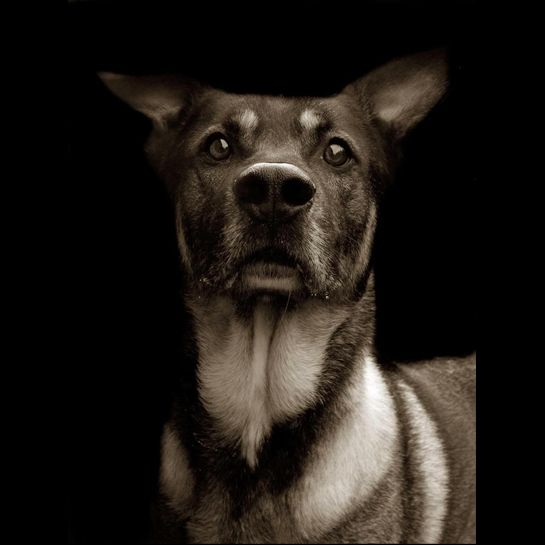 Joshua from photographer Traer Scott's project Shelter Dogs