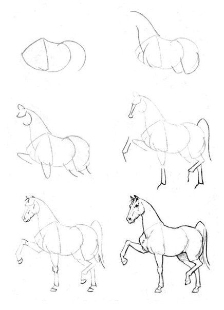 7353943add902aacba204efe86d8d80b horse drawing tutorial drawing step 15 best images about drawing animals on pinterest how to draw,Galls Siren Speaker Wiring Diagram
