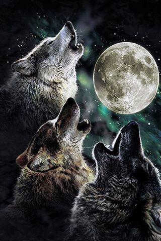 Howling wolfs practicing for the upcoming Blood moon with a lunar eclipse...whooo, wooot, woot whoooo!!!!