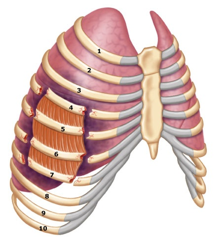 Flail Chest: ribs fractured in 2 or more places or if the sternum is fractured along with several ribs, a segment of chest wall may be detached from the rest of the thoracic cage. Signs and symptoms are that the injured side of the chest has paradoxical movements. Immobilize flail segment, provide supplementary oxygen and rapid transport.