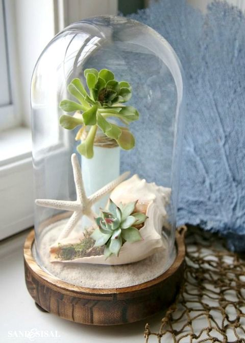 Create a beachy succulent terrarium under a cloche. Featured on CC: http://www.completely-coastal.com/2016/03/glass-cloche-decor-ideas.html