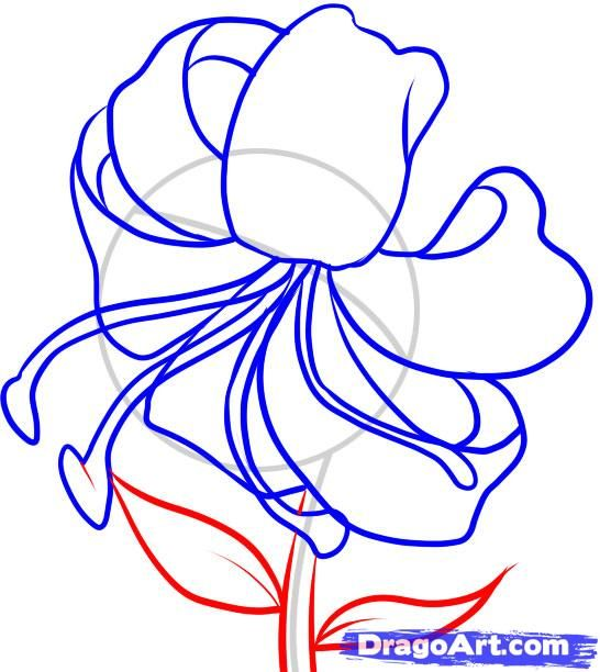 how to draw a tiger lily step 5