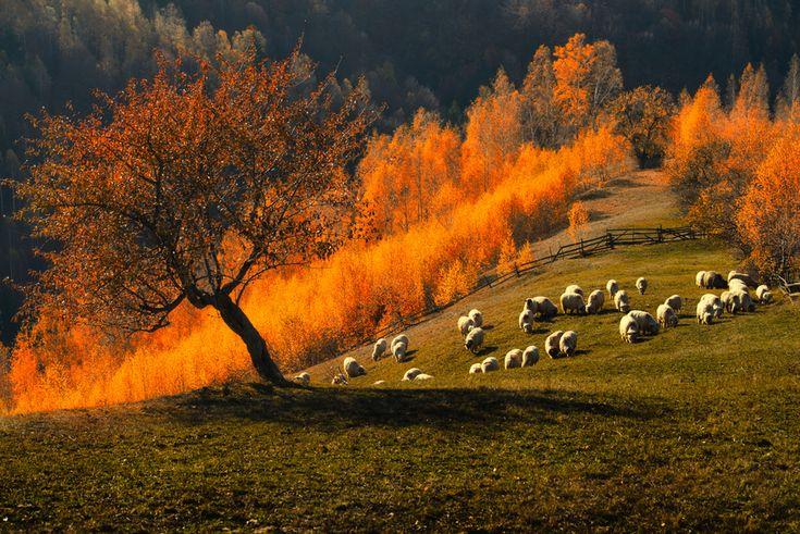 """romanianculture: """"Rural Brasov (Romania) """""""