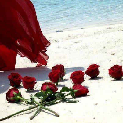 Rosas na praia - http://www.facebook.com/photo.php?fbid=354352914675308=a.220385114738756.43766.220383748072226=1=nf - 207607_354352914675308_1158562567_n.jpg (403×403)