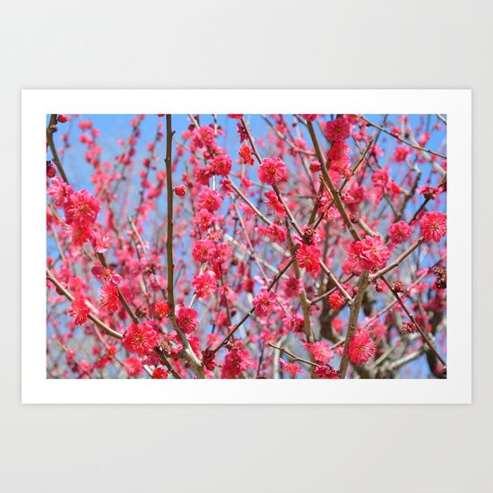 Ume Hana Art Print by Claire Louise - $15.00