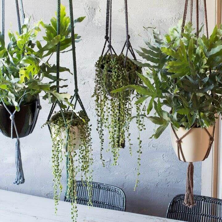 Hangplanten behoren tot de interieurtrends 2017. Het is van oorsprong een woontrend uit de jaren 70. Nu in een modern jasje dat past bij de woontrends 2017.