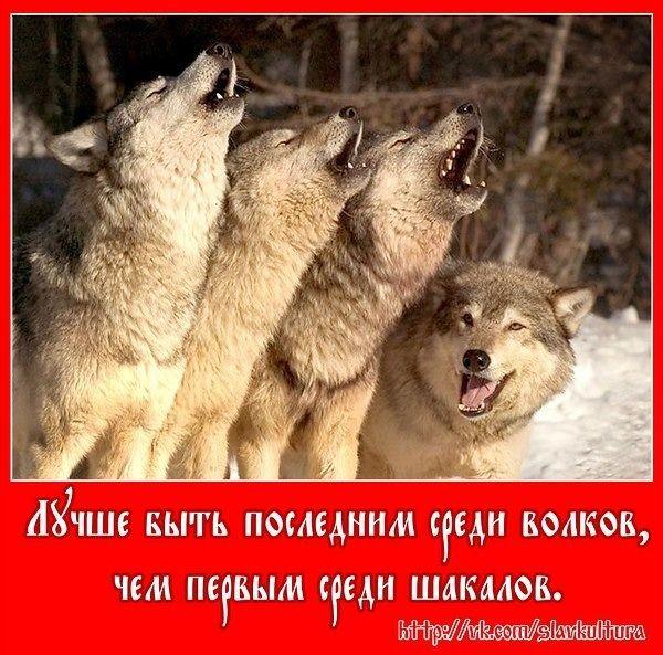 2364604716.jpg — Яндекс.Диск