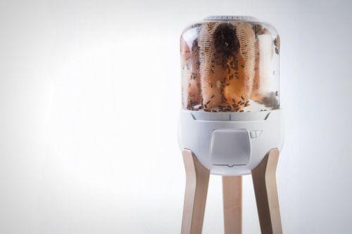 Homehive es un kit que permite no sólo criar abejas con facilidad, también se puede tener una pequeña fabrica de miel en casa. Diseño que crea un refugio seguro para toda la colmena. Un prospero ecosistema para tener en casa y disfrutar de una rica...