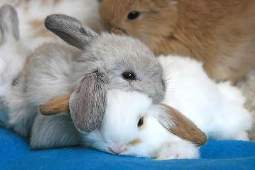 Bunnies!!! I AM OBSESSED!!!: Snuggles, Rabbit, Animal Pics, Animal Baby, Cuddling, Baby Bunnies, Pets Photos, Baby Animal, Naps Time