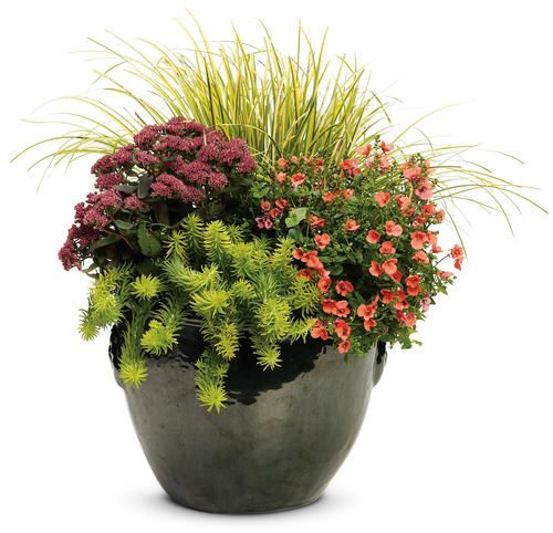 """This is a nice departure from the """"usual"""" potted flowers.  Perennials mixed with annuals."""