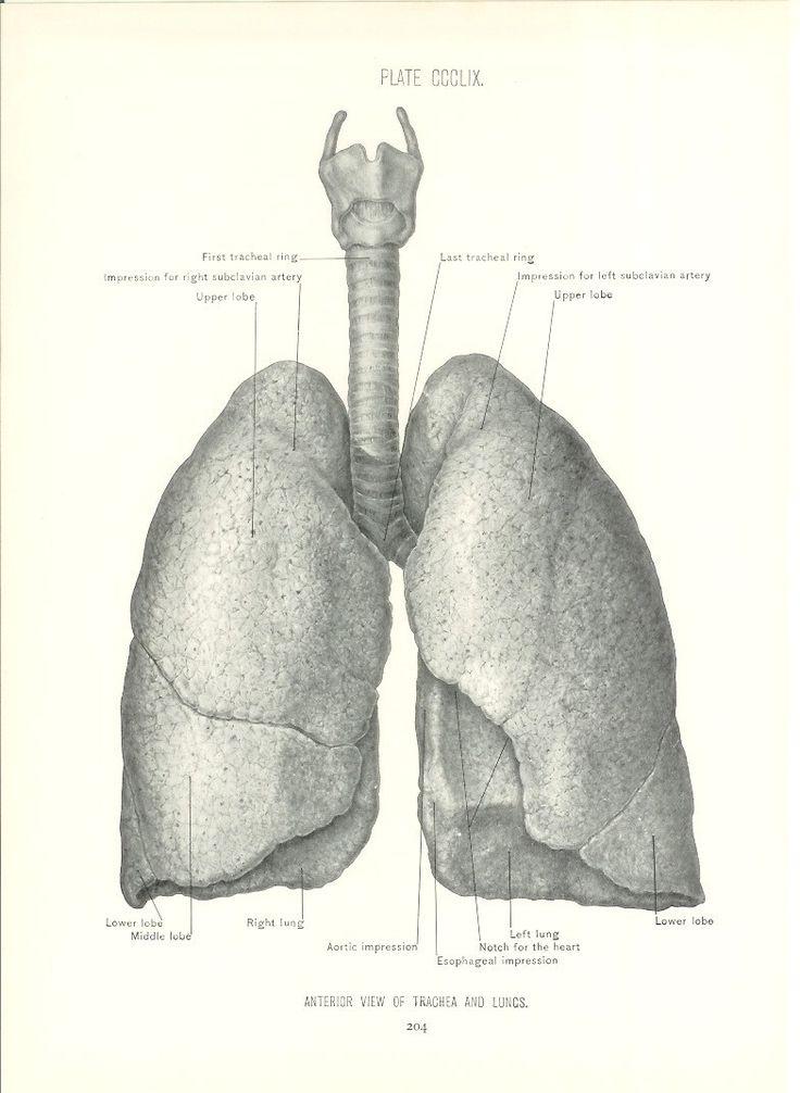 64 best Vintage Medical images on Pinterest | Human anatomy, Vintage ...