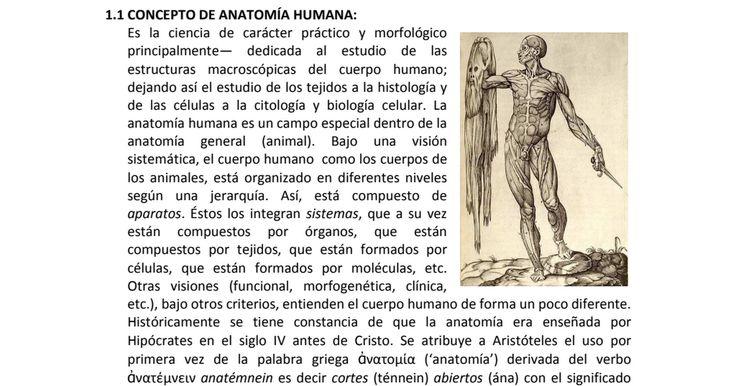 197 best Anatomía images on Pinterest | Anatomía de la cara ...