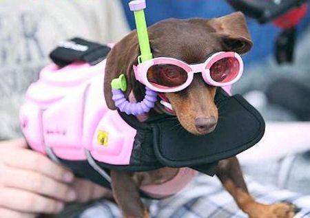 Henley attended Petland's Dachshund Derby and Costume Contest in Round Lake Beach, Illinois