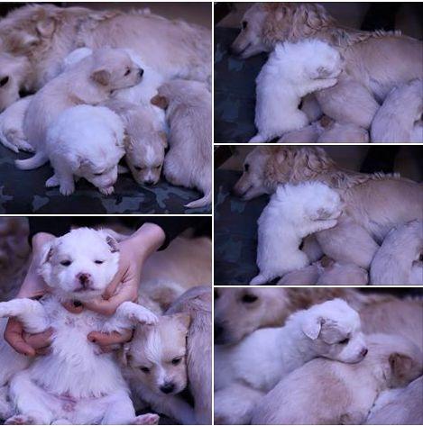 Emergenza cucciolata a Bari