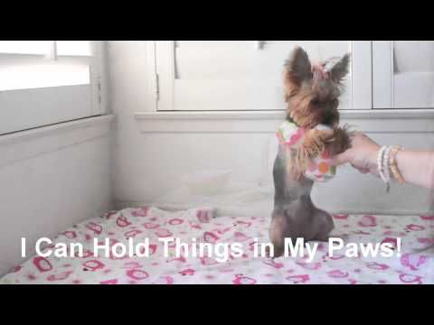 ▶ Funny Video of Dog with Baby Blinky and Bottle - Chloe Polka Dot - YouTube