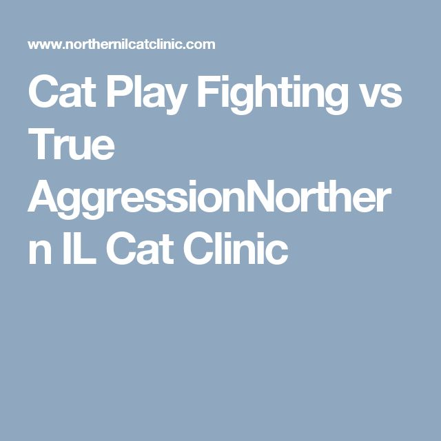 Cat Play Fighting vs True AggressionNorthern IL Cat Clinic