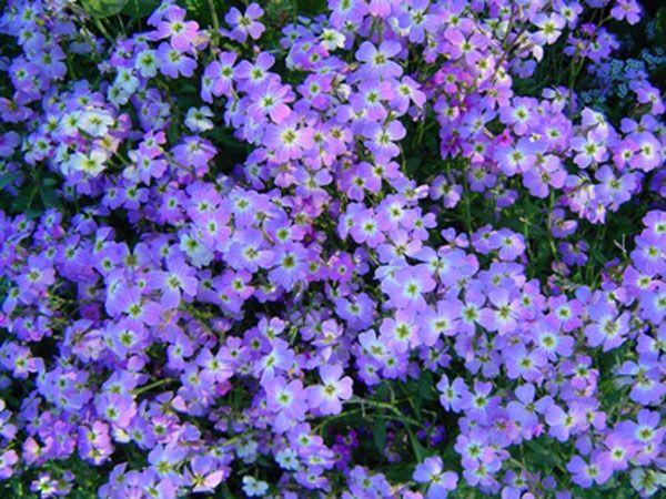 7 razones para elegir las plantas anuales sobre las perennes
