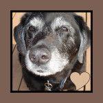 Find the Best Senior Dog Food Brands here. Human Grade Senior formulas available: Orijen, Blue Buffalo, Artemis, Fromm , Flint River Ranch and more @ http://recipes4gourmetdogs.com/senior-dog-food/#sthash.u9MGpuvu.dpbs