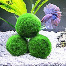 Tropical Fish Stores | Aquarium Accessories - How Can We Help You?