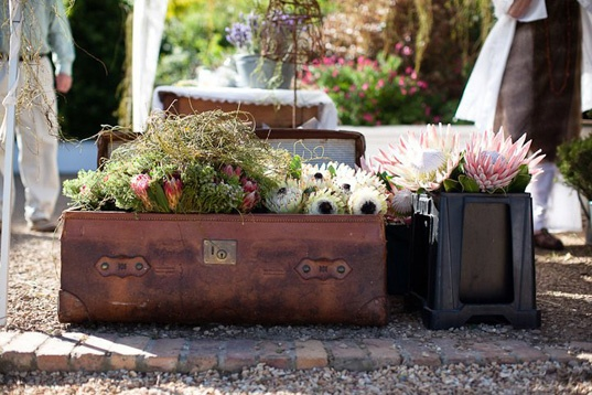 vintage suitcases and proteas