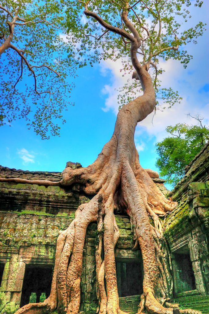 """Ngôi đền kỳ bí Ta Prohm - Quần thể Angkor------------------------------------------------------------Đại lý vé máy bay chính thức Bảo Gia Trần Cung cấp vé máy bay giá tốt nhất trong chương trình """"Ưu đãi đặc biệt Tp Hồ Chí Minh/ Phú Quốc - Đông Nam Á"""" của Vietnam Airlines   www.baogiatran.vn www.facebook.com/baogiatran.dailyvemaybaychinhthuc"""