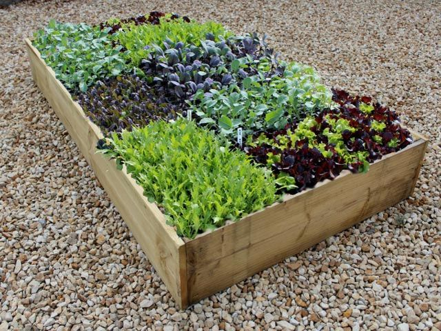 The classic 9 inch high raised vegetable garden bed 6ft
