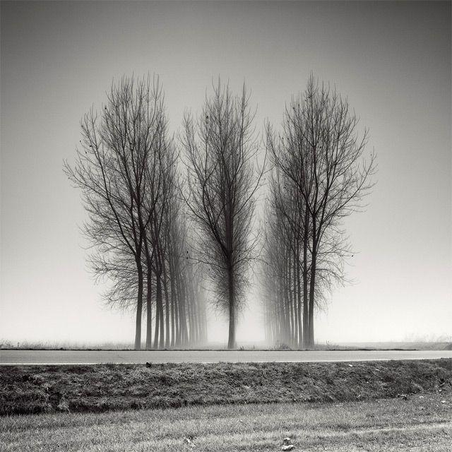 Long Exposure Tree Landscapes by Pierre Pellegrini