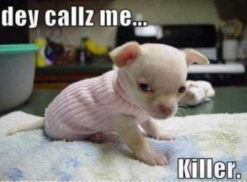Baby captions with cute animals funny