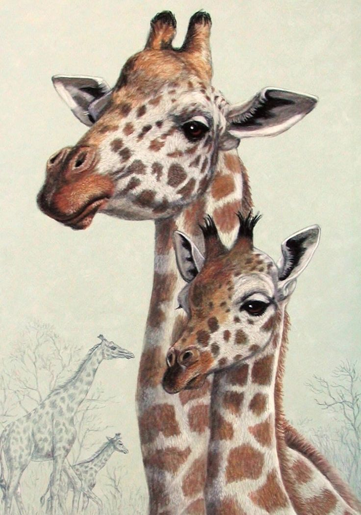 The 25+ best Baby giraffe pictures ideas on Pinterest ...