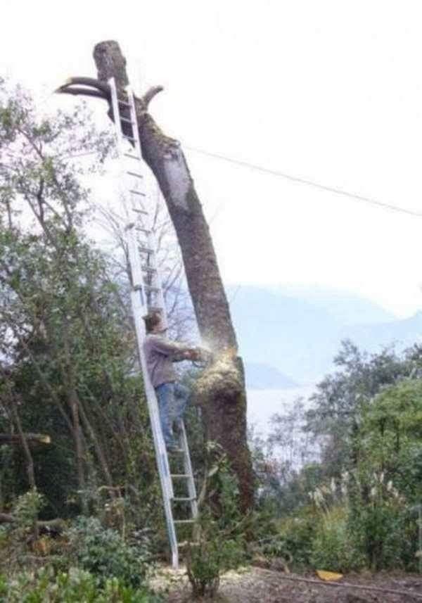 tar klo pohonnya tumbang. mungkin yg motong va jatuh ya? #bingung  hahahhaah