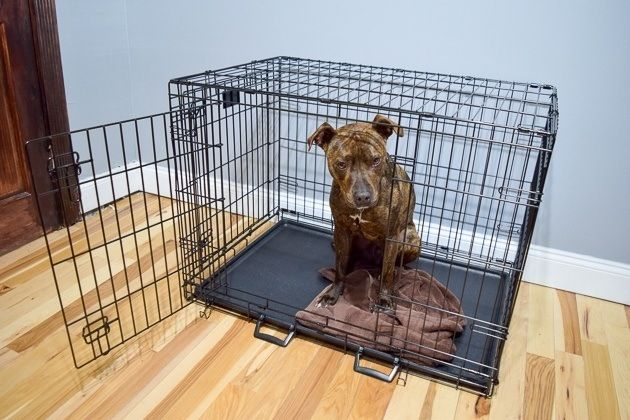 How To Crate Train A Dog At Night Dog Training Dog Crate Crate