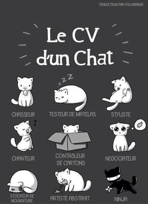 Le CV d'un chat que vous connaissez par cœur si vous en avez un ^-^