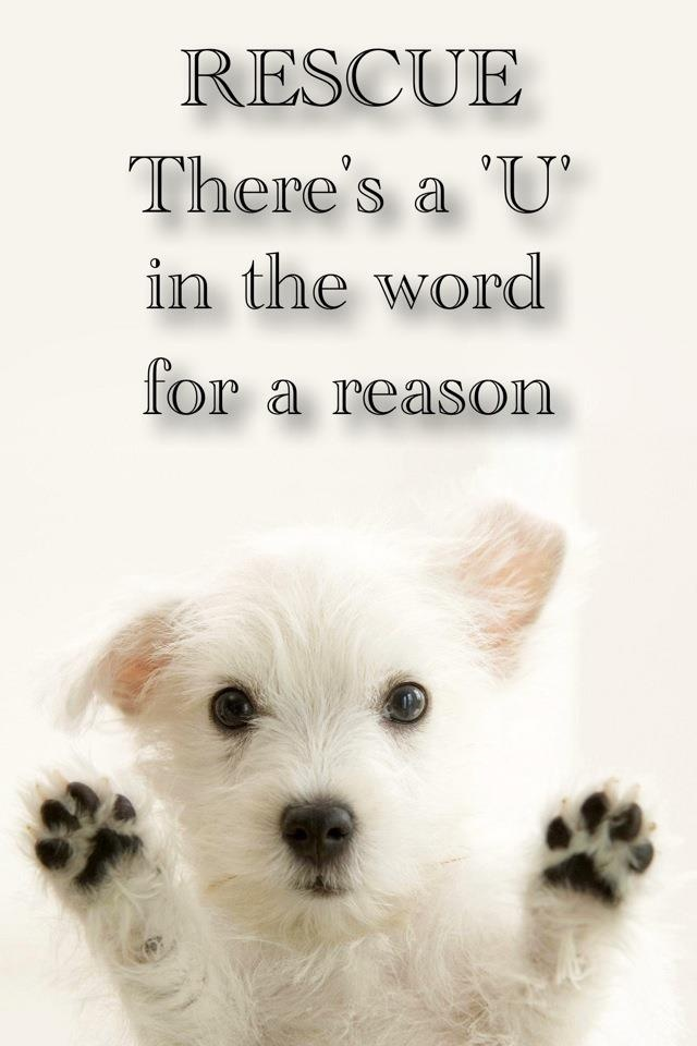 Rescue There S A U In The Word For A Reason Dog Quotes I