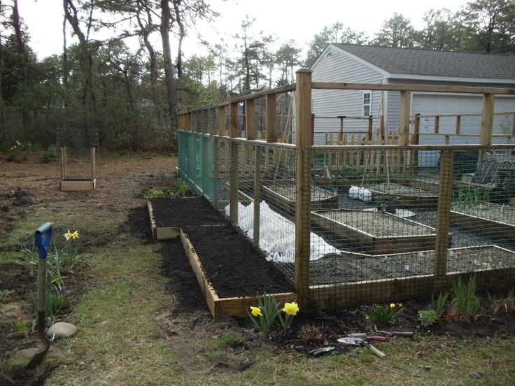 37 best images about Deer Proofing on Pinterest | Gardens ...