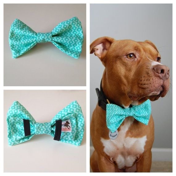 Turquoise Boys Will Be Boys Bow Tie Collar Accessory by PitsnPosh, $12.00, we need one for Ranger!