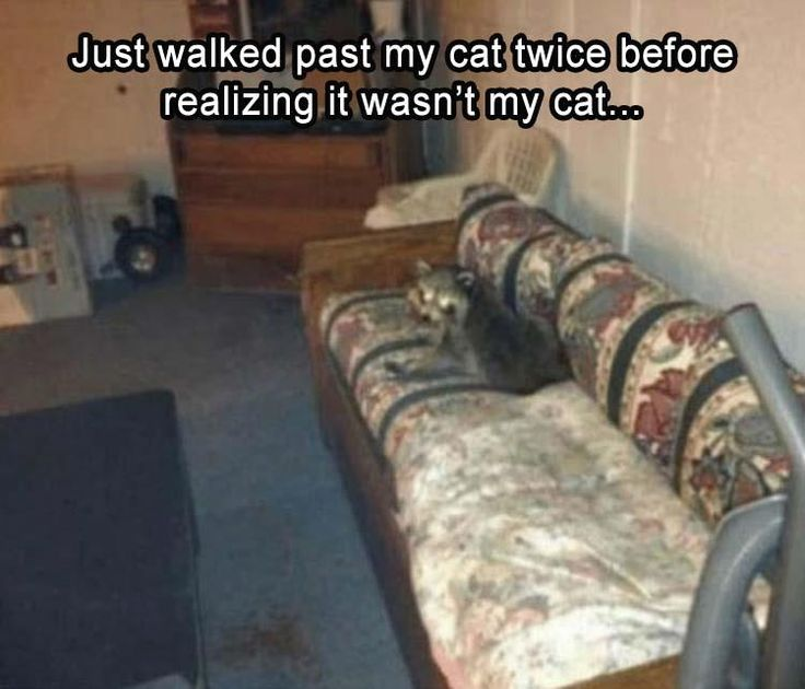Funny Pictures For Today #20