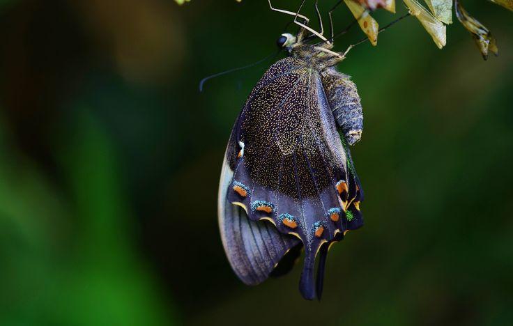Beautiful Butterflies #nature #natura #blue #blu #dark #buio #scuro #orange #arancio #black #nero #yellow #giallo #spot #dot #pois #glitter #purple #viola #bellissima #meraviglioso #meraviglio #stunning