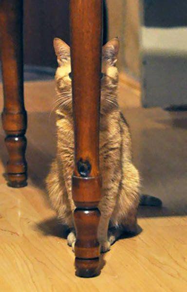 おかしな猫たち03