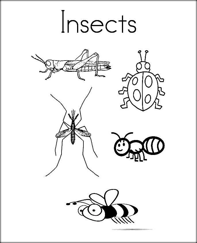 Insects Coloring Pages Pictures For Preschoolers Insect Coloring