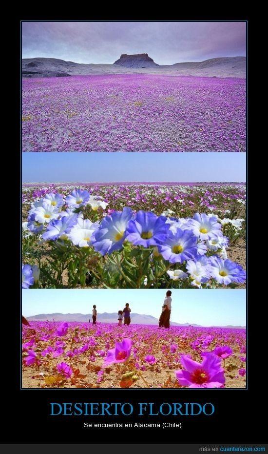 Atacama flowering desert, Chile.