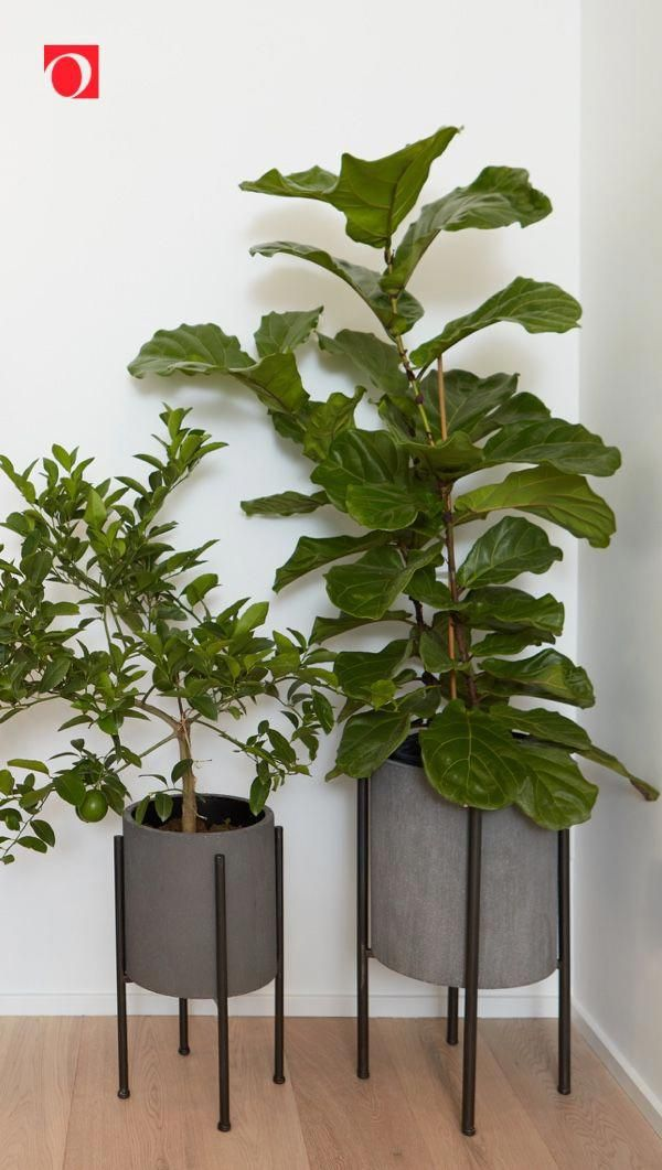7 Best Fake Plants For Decorating Your Home Fake Plants Decor