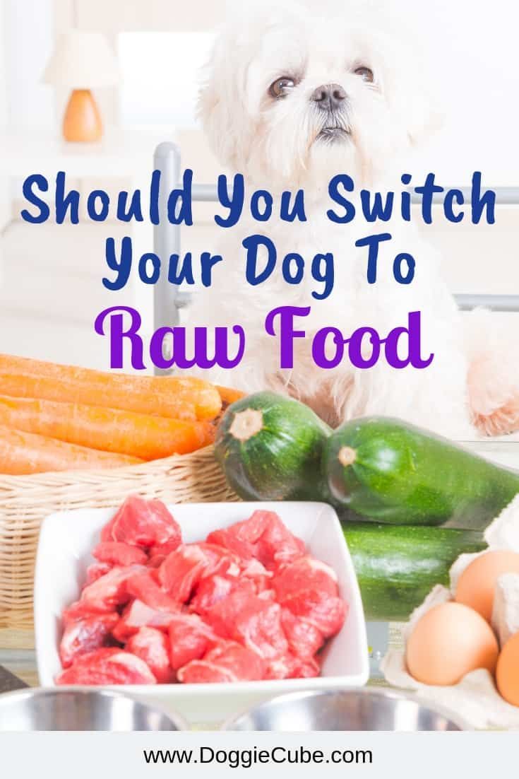 There Are Many Benefits In Feeding Your Dog With Raw Dog Food