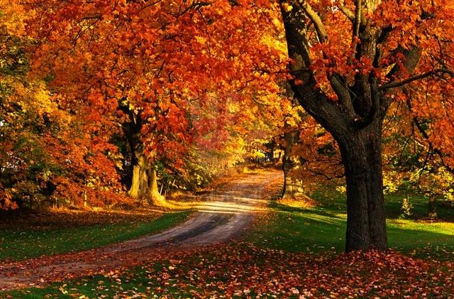 Fall Foliage in Nova Scotia..