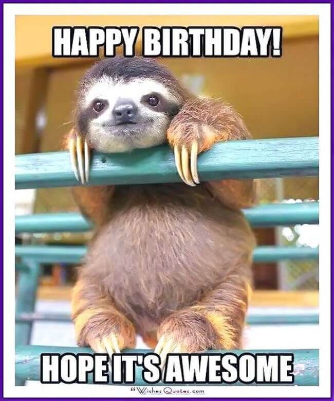 27 Happy Birthday Memes That Will Make Getting Older A Breese In 2020 Happy Birthday Animals Sloth Happy Birthday Cute Animal Quotes