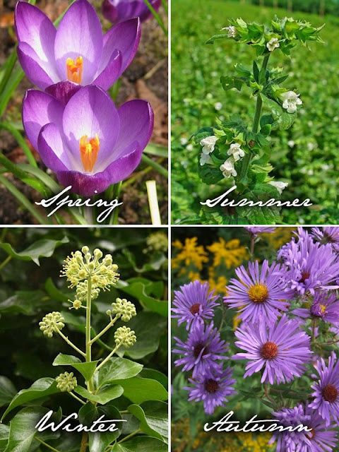 Planting Honey bee friendly gardens