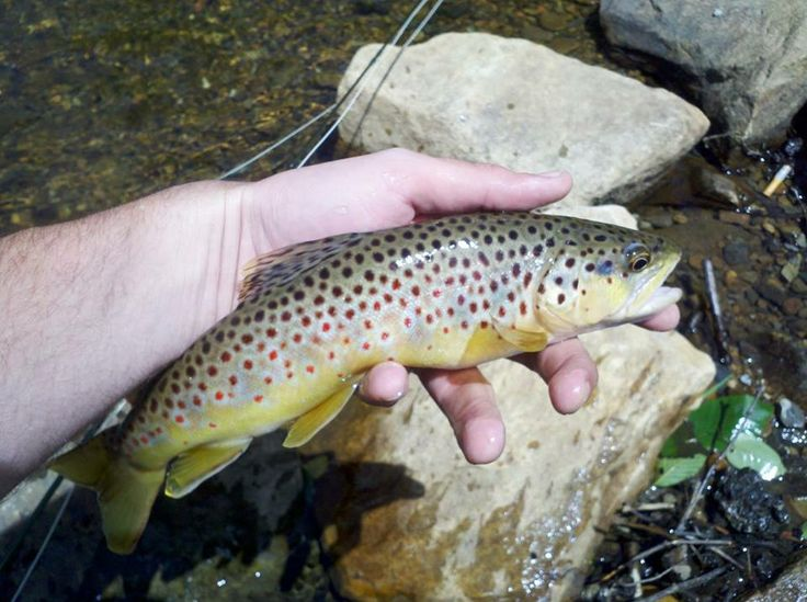 17 best images about fishing on pinterest catfish rigs for Best trout fishing in pa