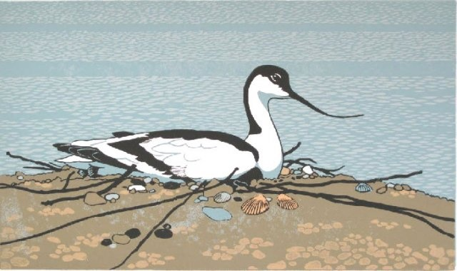 'Brooding Avocet' by Robert Gilmor